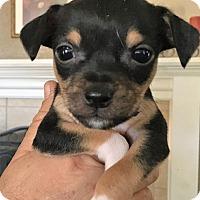 Adopt A Pet :: Wrigley - Oakley, CA