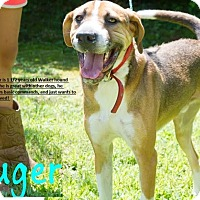 Adopt A Pet :: Ruger - Broadway, NJ