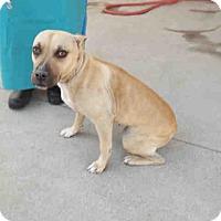 Adopt A Pet :: Sandy - Newnan City, GA