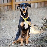 Adopt A Pet :: Ace - Palmyra, NE