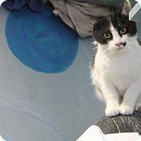 Adopt A Pet :: Landry - West Des Moines, IA