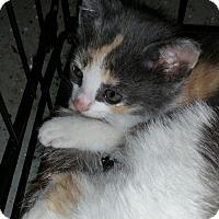 Adopt A Pet :: Nala (& Jazz) - Herndon, VA