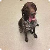 Adopt A Pet :: Jake 3542 - Columbus, GA