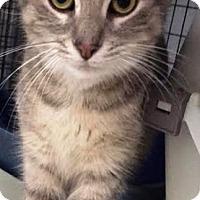 Adopt A Pet :: Fleur - Kalamazoo, MI