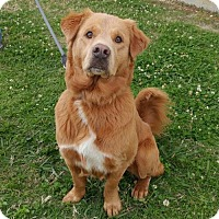 Adopt A Pet :: Bear - Baton Rouge, LA
