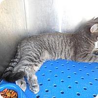Adopt A Pet :: Josie - white settlment, TX