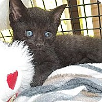 Adopt A Pet :: Oliver - Acme, PA