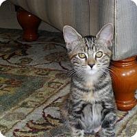 Adopt A Pet :: Mini - Redondo Beach, CA