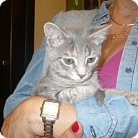Adopt A Pet :: Rosalie - Colmar, PA