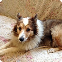 Adopt A Pet :: Roxy - San Diego, CA