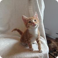 Adopt A Pet :: Cooper - Island Park, NY