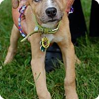 Adopt A Pet :: Snoop - Alpharetta, GA