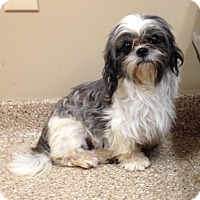 Adopt A Pet :: Dozzy - Fairview Heights, IL