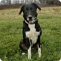 Adopt A Pet :: HAVYN - New Cumberland, WV