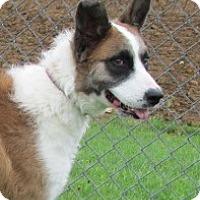 Adopt A Pet :: Bandi - Germantown, MD