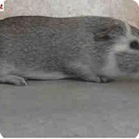 Adopt A Pet :: *Urgent* Robert - Fullerton, CA