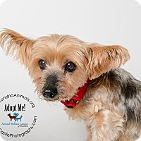 Adopt A Pet :: Lovely - Alexandria, VA