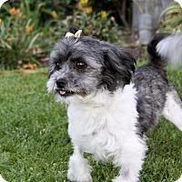 Adopt A Pet :: BRIA - Newport Beach, CA