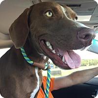 Adopt A Pet :: Jade - ROSENBERG, TX