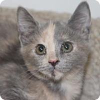 Adopt A Pet :: Sassy - Greensboro, NC