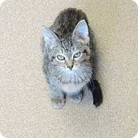 Adopt A Pet :: Juicy - Brookings, SD
