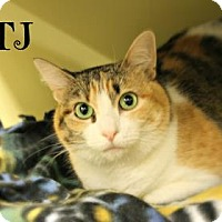 Adopt A Pet :: TJ - West Des Moines, IA