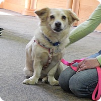 Adopt A Pet :: Sierra - Fort Atkinson, WI
