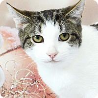 Adopt A Pet :: Dinky - Harrisonburg, VA
