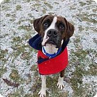 Adopt A Pet :: Cowboy - Delaware, OH