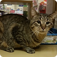 Adopt A Pet :: Mickey - North Haven, CT
