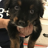 Adopt A Pet :: Joel - Thousand Oaks, CA