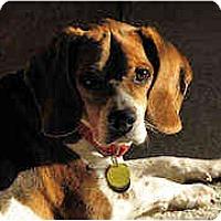 Adopt A Pet :: Dale - Novi, MI