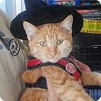 Adopt A Pet :: Thumbelina - Pasadena, CA
