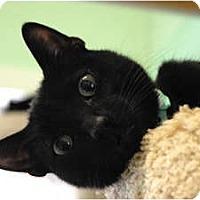Adopt A Pet :: Avent - Lunenburg, MA