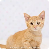 Adopt A Pet :: Megan - Fountain Hills, AZ