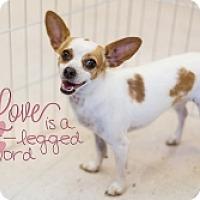 Adopt A Pet :: Nadia - Mesa, AZ