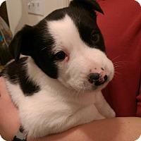 Adopt A Pet :: Jersey - Ogden, UT