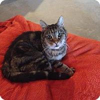 Adopt A Pet :: Tigger - Rochester, NY