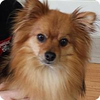 Adopt A Pet :: Jasper - Toronto, ON
