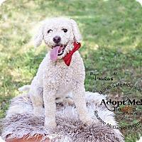 Adopt A Pet :: Tarus - Lubbock, TX