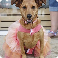 Adopt A Pet :: Lillian - Homewood, AL