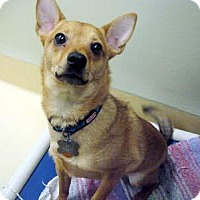 Adopt A Pet :: Chico - Portland, OR