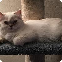 Adopt A Pet :: Bionca - Hampton, VA