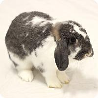 Adopt A Pet :: Luna - Bradenton, FL