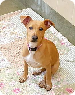 Terrier (Unknown Type, Medium) Mix Dog for adoption in San Antonio, Texas - Jennie