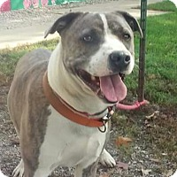 Adopt A Pet :: Diesel - Paris, IL