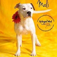Adopt A Pet :: Mali - Topeka, KS