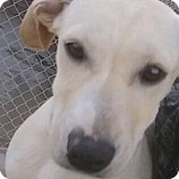 Adopt A Pet :: Tandy - Manhattan, KS