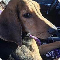 Adopt A Pet :: River - Kaufman, TX