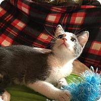 Adopt A Pet :: Lucas - Hammond, LA